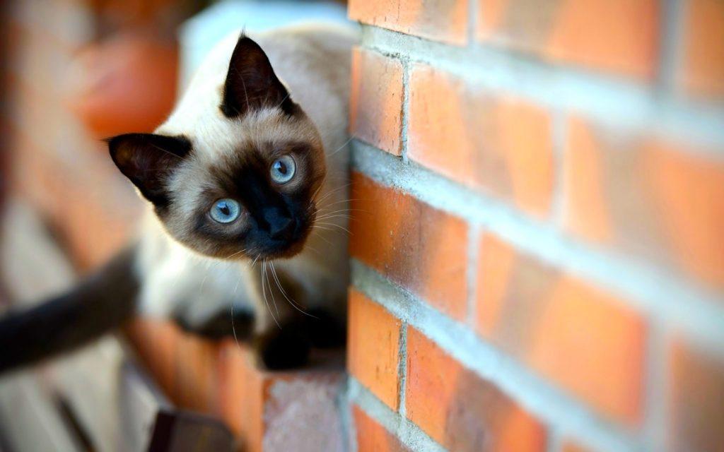 Кот и клинкерная плитка